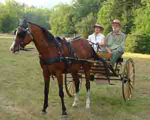 Cart horse driving harness horse carriage