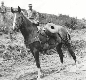 Horse SGT RECKLESS
