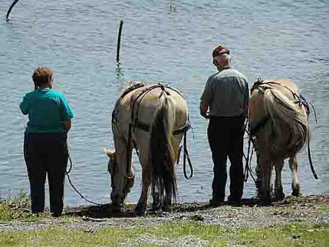 Lake Horses watering hole