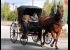 Antique horse-drawn doctor's Buggy New Hampshire