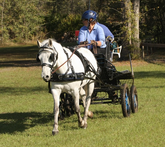 Laurie Goodwin, Pony cart driver, Granite State Carriage Club