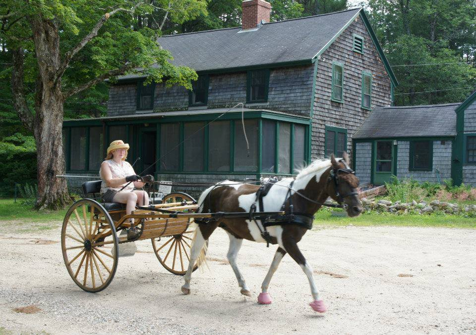Jean Harvey's driving pony Pixie, pony cart