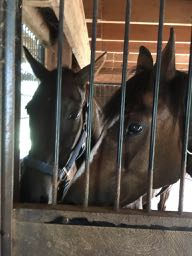 Of Mice and Geldings