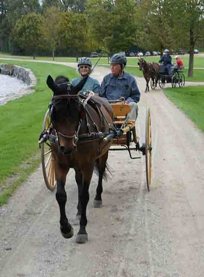 Harness Cart Horses