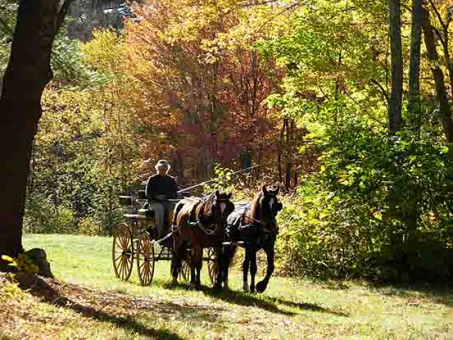 Pleasure pairs driving Granite State Carriage club