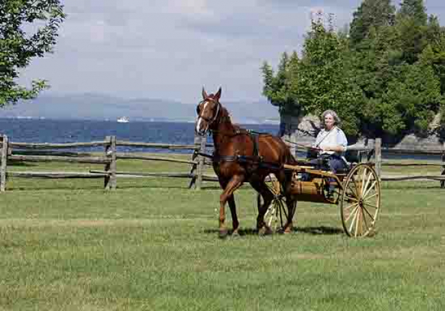 Harness Horse road cart Vermont