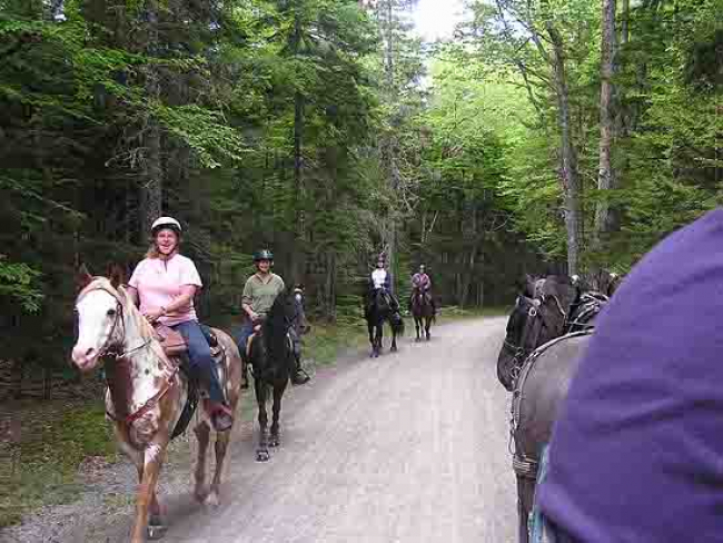 horseback riders pairs carriage driver