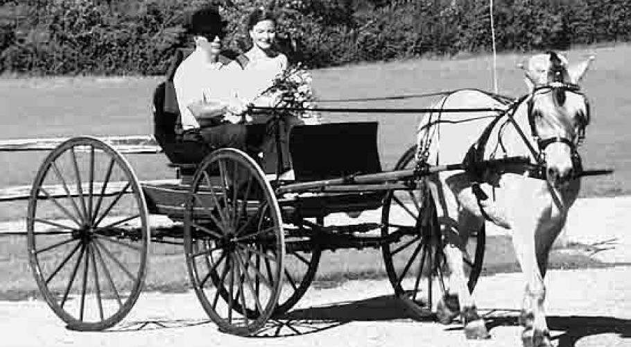 2000 horse carriage wedding bride