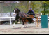 horse cart arena driving trial meadowbrook